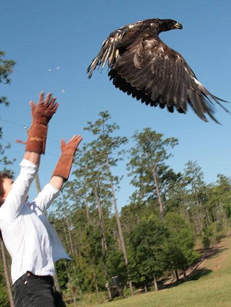 eagle-012.jpg