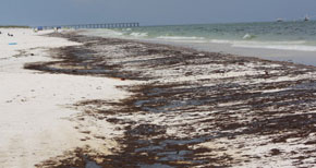 Florida To Join Multi-State Lawsuit Over Gulf Oil Disaster