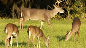 FWC: Guide To Northwest Florida's Fall Hunting Seasons