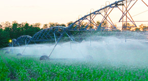Extension Service To Hold Irrigation And Crop Management Field Day