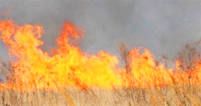 Florida Forest Service Warns Of Wildfire Danger Time