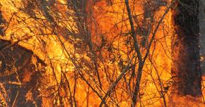 Century Adopts Florida Forest Service Burn Regulations
