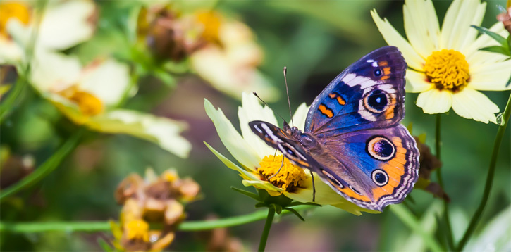 Weekend Gardening Plant Your Own Butterfly Garden NorthEscambia – Plants for Butterfly Garden