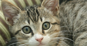 Escambia Animal Shelter Suspends Cat Adoptions Due To Infections