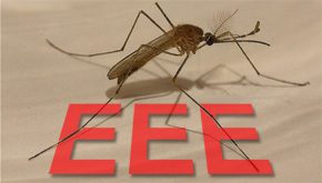 Second Case Of Eastern Equine Encephalitis Confirmed In Area ...