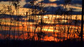 Photos: A Barrineau Park Sunset