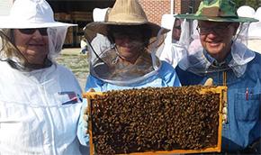 Honey Bee Workshop To Be Held Saturday In Molino