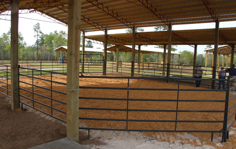 Annual Livestock Show And Sale Saturday At New 4 H Barns