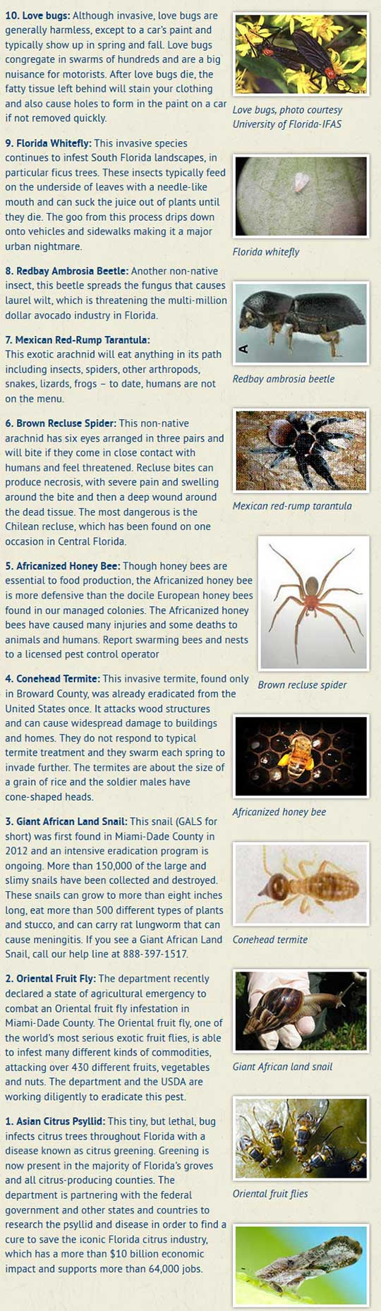 Look Out For Florida's Top 10 Creepy Crawlers : NorthEscambia com