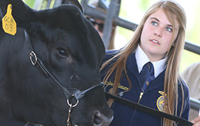 Escambia County Spring Livestock Show Results