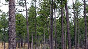 Free Forestry 101 Workshop For Landowners