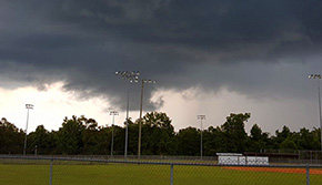 Thursday Storms Bring Heavy Rainfall, Down Tree