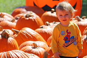It's a Tradition: Pumpkins, Pumpkins Everywhere (With Photo Gallery)