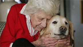 Grant Allows Meals On Wheels To Provide Pet Food