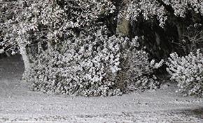 North Escambia Area Weather Closure List