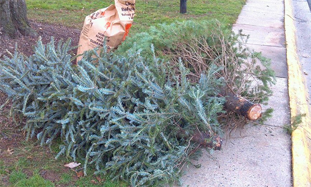 Free Recycling for Christmas Trees and Lights