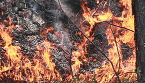 Forest Service Battles 80 Acre Wildfire Near Walnut Hill