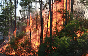 Forest Service: Cool, Dry Weather Increases Wildfire Risk