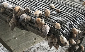 North Escambia Has Been Invaded By Snails