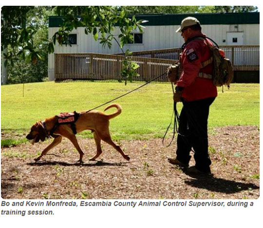 From Shelter To Service: Escambia County Working Dogs - NorthEscambia.com 2