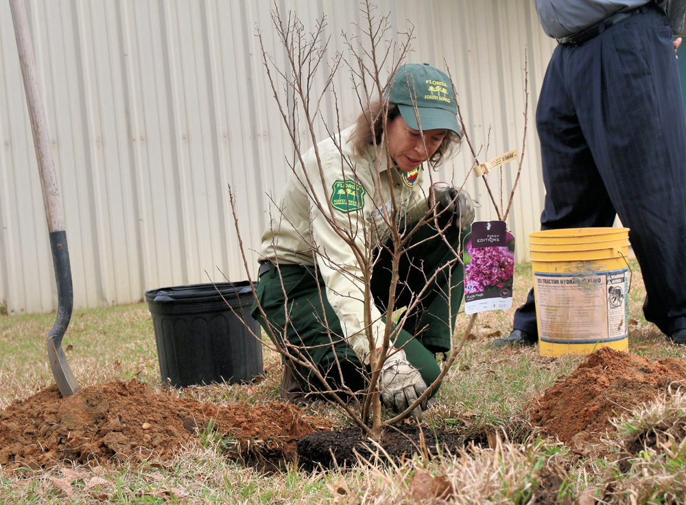 oncor free tree giveaway 2019