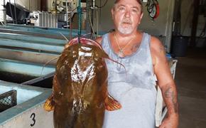 Man Catches New State Record 69.9 Pound Flathead Catfish In Santa Rosa County