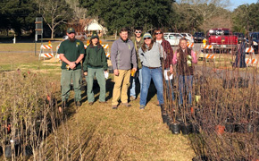 Arbor Day Tree Giveaway In Molino, Art Contest Announced