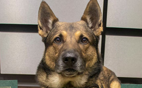 K-9 Cairo Retires From Escambia County Sheriff's Office